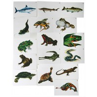 Многообразие хордовых. Рыбы, земноводные и пресмыкающиеся. (16карт.)