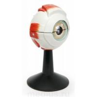 Н06 Глазное яблоко (объемная разборная модель) (11х11х21 см/ 0,29 кг)