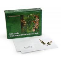 Гербарий Основные группы растений (9 видов)