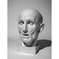 Голова анатомическая (ск. Гудон)
