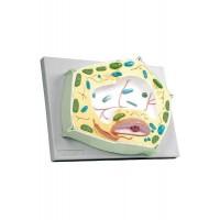 6231.01 Растительная клетка
