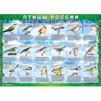 Комплект таблиц Птицы России (100х70) 4 листа