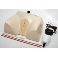 Т7 Тренажер для катетеризации мочевого пузыря (женский)