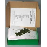 Гербарий Дикорастущих растений(28 видов)