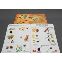 Коллекция Семена  и плоды