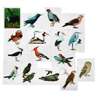 Модель-аппликация Многообразие хордовых. Птицы. (16карт.)