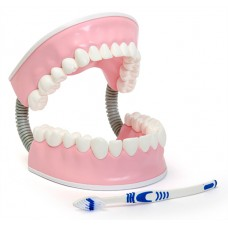 С06 Тренажер для ухода за зубами (16х17х17 см/ 0,66 кг)