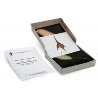 Одноклеточные водоросли (набор из 24 карт) динамическое пособие 15х15