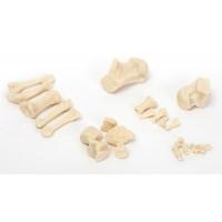 Р28 П Стопа правая (набор из 26 костей в коробке)