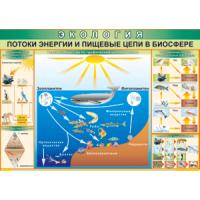 Эвология. Потоки энергии и пищевые цепи в биосфере (100х70) таблица