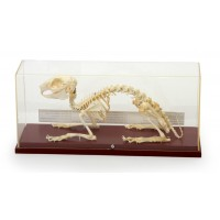 Скелет кролика Х14К